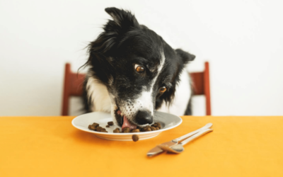 A List of Foods Your Dog Can & Can't Eat